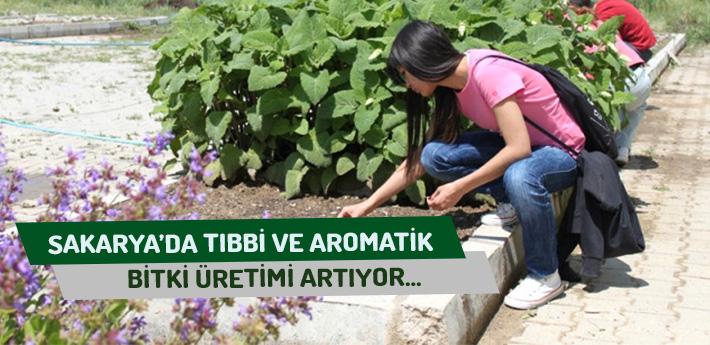 Sakarya'da Tıbbi ve Aromatik Bitki Üretimi Artıyor