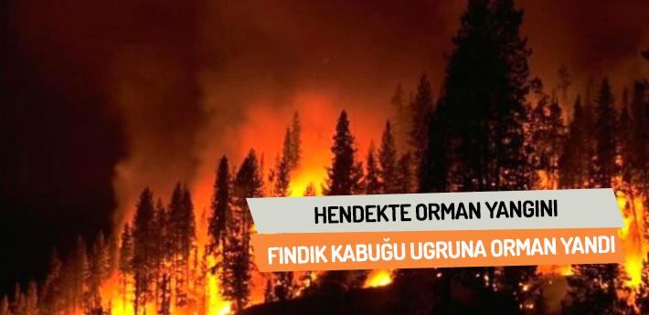 Fındık kabuğu uğruna orman yandı!