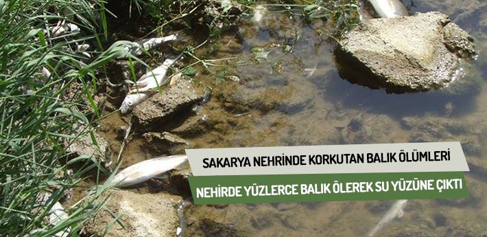 Sakarya Nehrinde korkutan balık ölümleri !