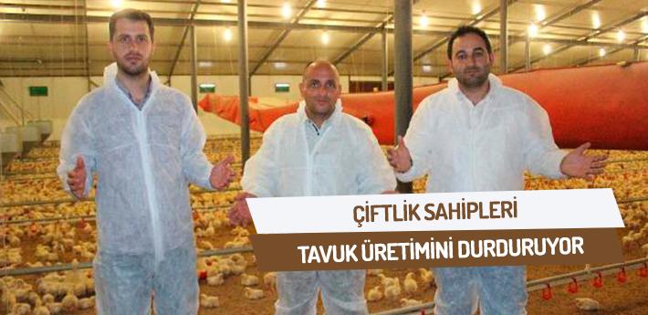 Çiftlik sahipleri tavuk üretimini durduruyor
