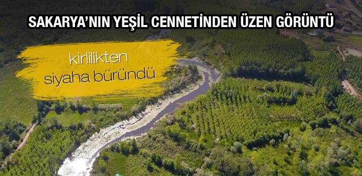 Sakarya'nın yeşil cennetinde üzen görüntü