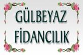 Gülbeyaz Fidan