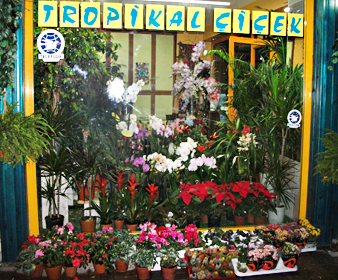 Tropikal Çiçek - Naci Şengül